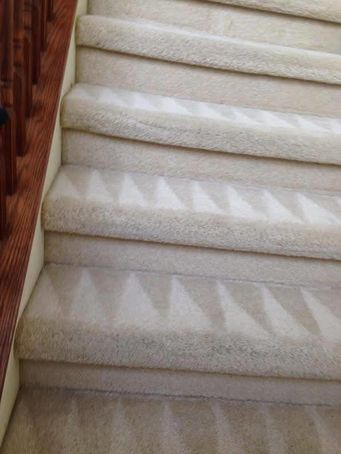 Before & After Carpet Cleaning in Lutz, FL (2)