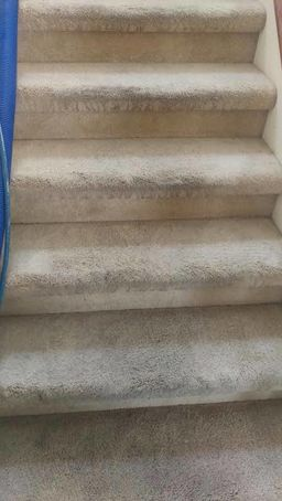 Before & After Carpet Cleaning in Lutz, FL (1)