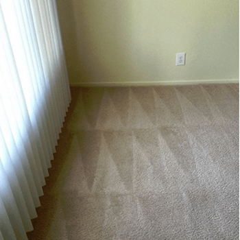 Odor and Stain Removal in Zephyrhills, FL